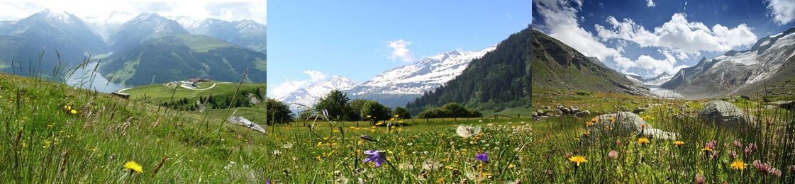 Banner Oostenrijk bloemen